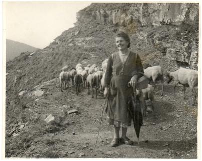 Pecore condotte al pascolo da Leonetta Fiorini (1955)